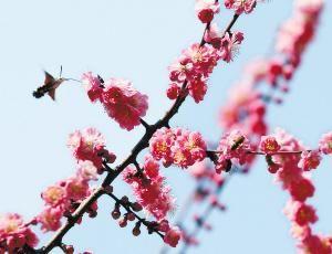 近日,西安街头鲜花绽放