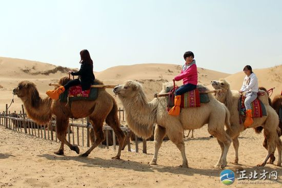 游客骑着骆驼穿行沙漠
