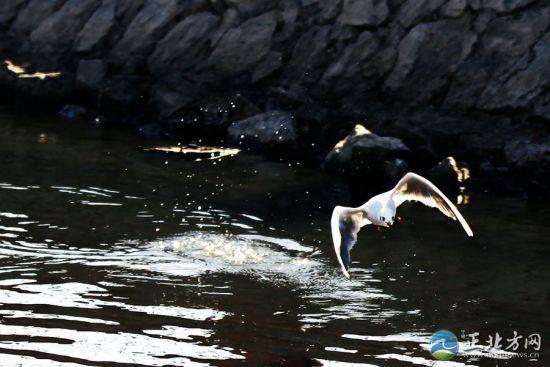 翱翔在空中的水鸟