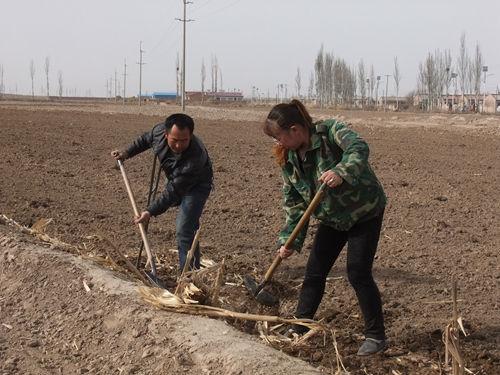 图为李永凤和丈夫徐宝文在一起劳作。记者王永钦摄