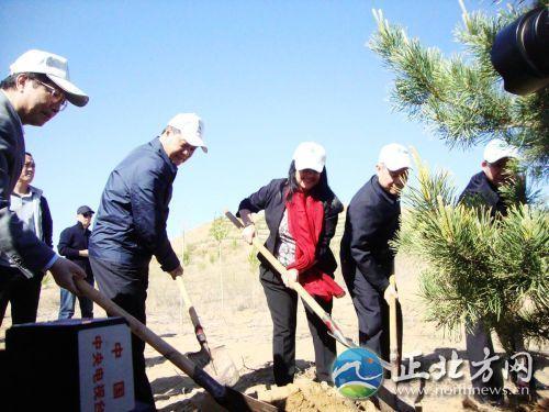 种下长青树