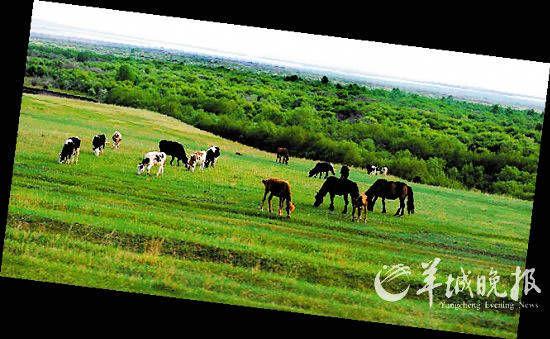 呼伦贝尔市扎兰屯境内牧草