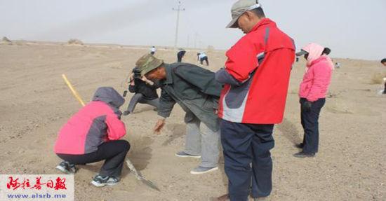 苏老向第一次来黑城种树的机关单位职工们讲解如何挖坑、栽树苗。 李倩天摄