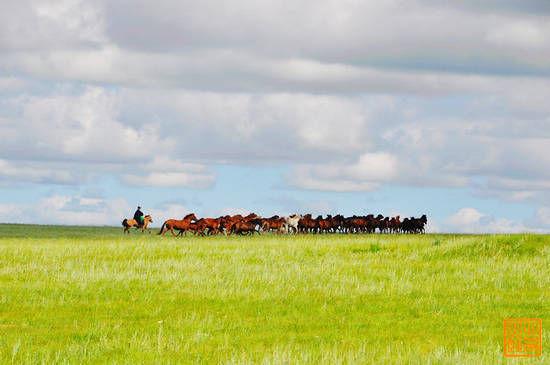 海拉尔附近的巴彦呼硕草原