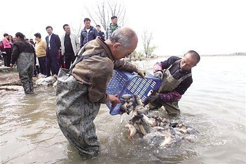 大量鱼蟹投放小白河水域
