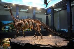 查干诺尔龙化石
