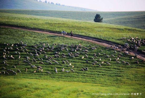 新浪旅游配图:草原养育了牧民 摄影:冰城馨子