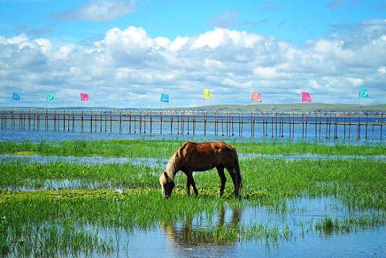 呼伦湖图片(图片来源于网络)