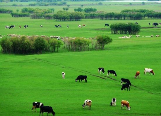 中国最美草原