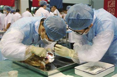 全国大学生第三届动物医学专业技能大赛开赛(图)