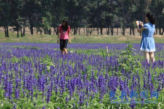 游客在薰衣草庄园