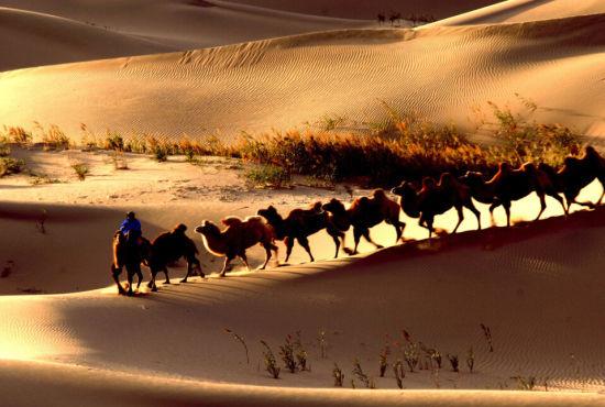在沙漠地区,汗液也是存储水分的方式,所以,耐旱的动物和植物,往往都不