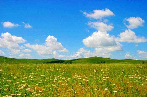 锡林郭勒草原鲜花遍野