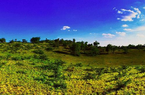 白音锡勒草原景区