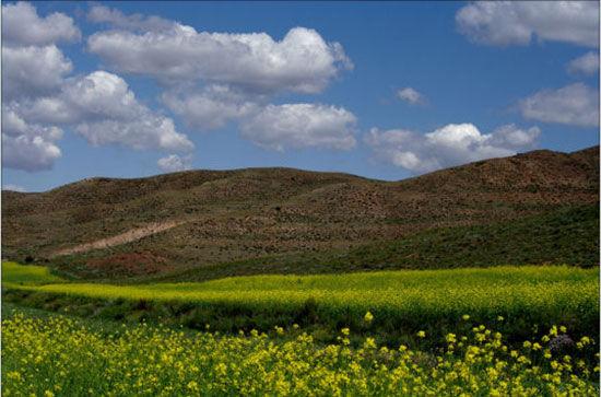大草原是草甸式草原,也是蒙古族的发祥地,我们去的希拉穆仁草高清图片
