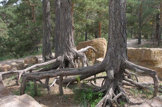 海拉尔国家森林公园相关景区
