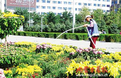 一名工人为菊花浇水,园林维护人员每天24小时在现场维护(刘刚 摄)