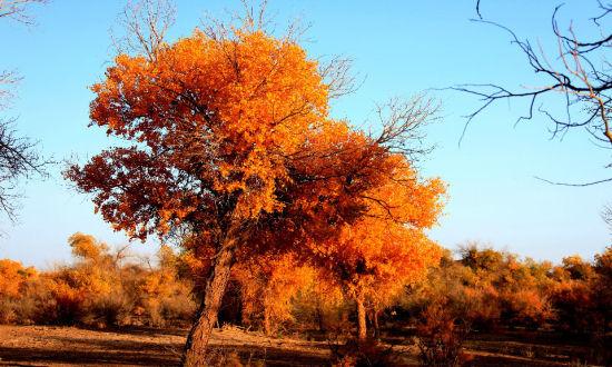 新疆塔里木盆地的塔克拉