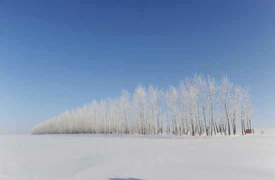 呼伦贝尔冬季景观