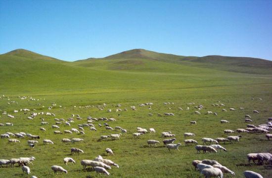 珠日河草原