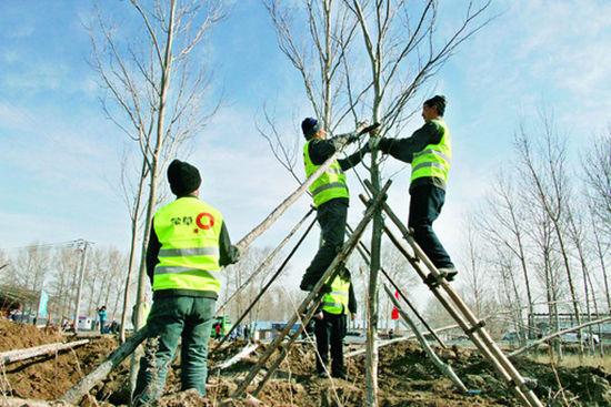 园林工人正在种树