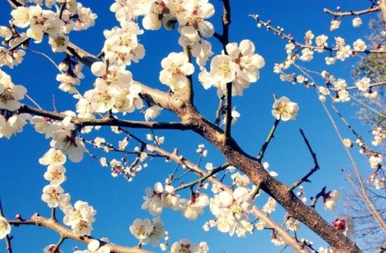蓝天和桃花