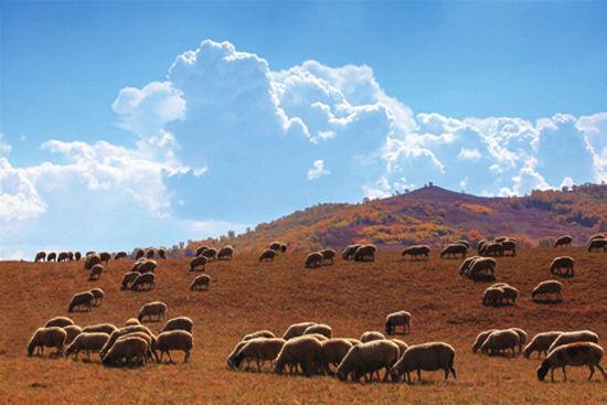 乌兰布统草原是自驾的好去处