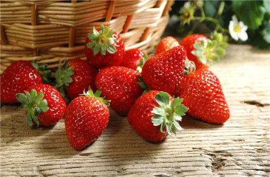 春访草莓园