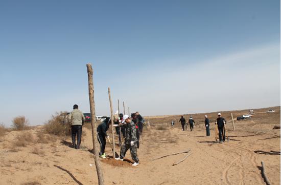 沙漠种树后图片