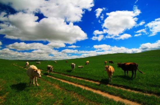 草原上的小道