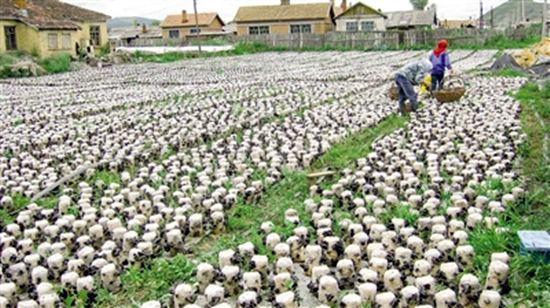 家庭农场�ylez)�9b$_家庭农场模式