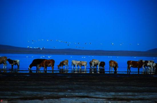 夜晚的马群