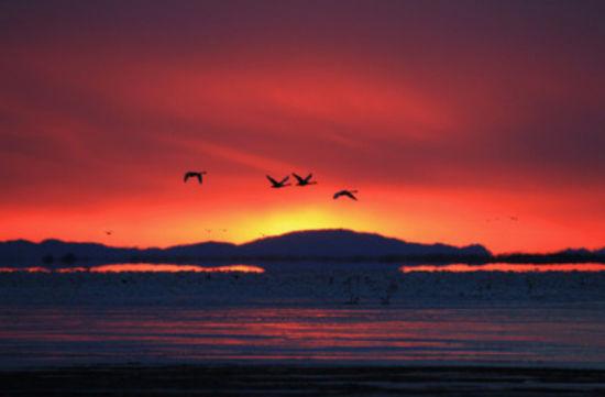 夕阳下的候鸟
