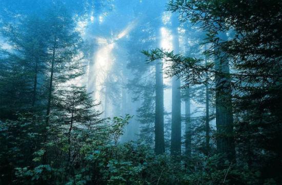牙克石的原始森林