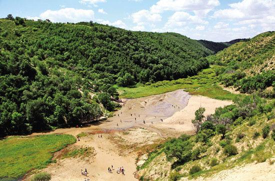 大渡口地下森林是一个在沙地中极为罕见的绿色地带.(左鸿飞)