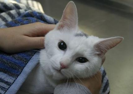 刚刚出生小猫的注意事项