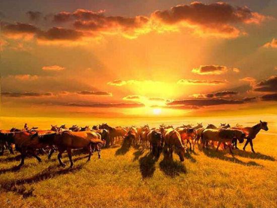呼伦贝尔草原马背上是父亲最神勇伟岸的背影讲道于宏洁视频图片