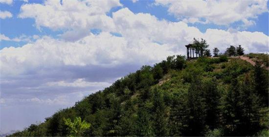 乌素图森林