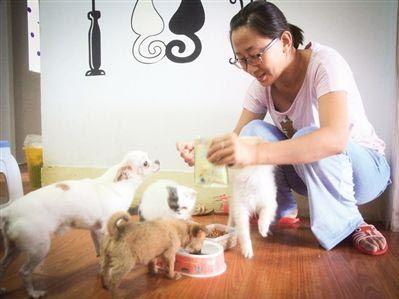 女孩收养流浪猫狗