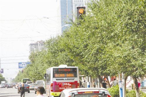 红灯被挡司机违规
