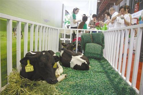 牛羊肉产业会开幕