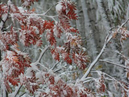 根河市秋雪映山红