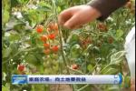 赤峰市红山区家庭农场:向土地要效益