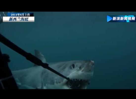 大白鲨咬烂海底相机 失主欲5000美元找回