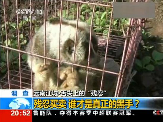 越南人在边境贩卖野生动物 称中国人有钱