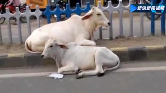 印度载百名乘客飞机降落时撞上水牛