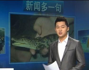 孝顺大学生为父母解闷 网购宠物鳄鱼