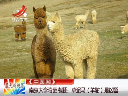 南京大学考试现奇葩试题 草泥马变凶器