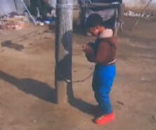 河南救助站将孩子拴树上称怕其乱跑