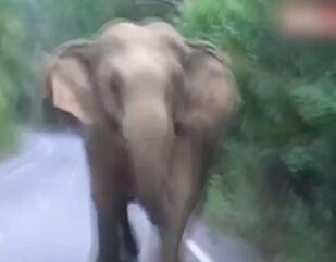 实拍泰国野生大象冲撞游客 踩扁汽车